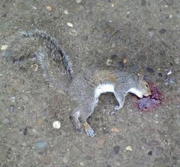 Squirrel # 1