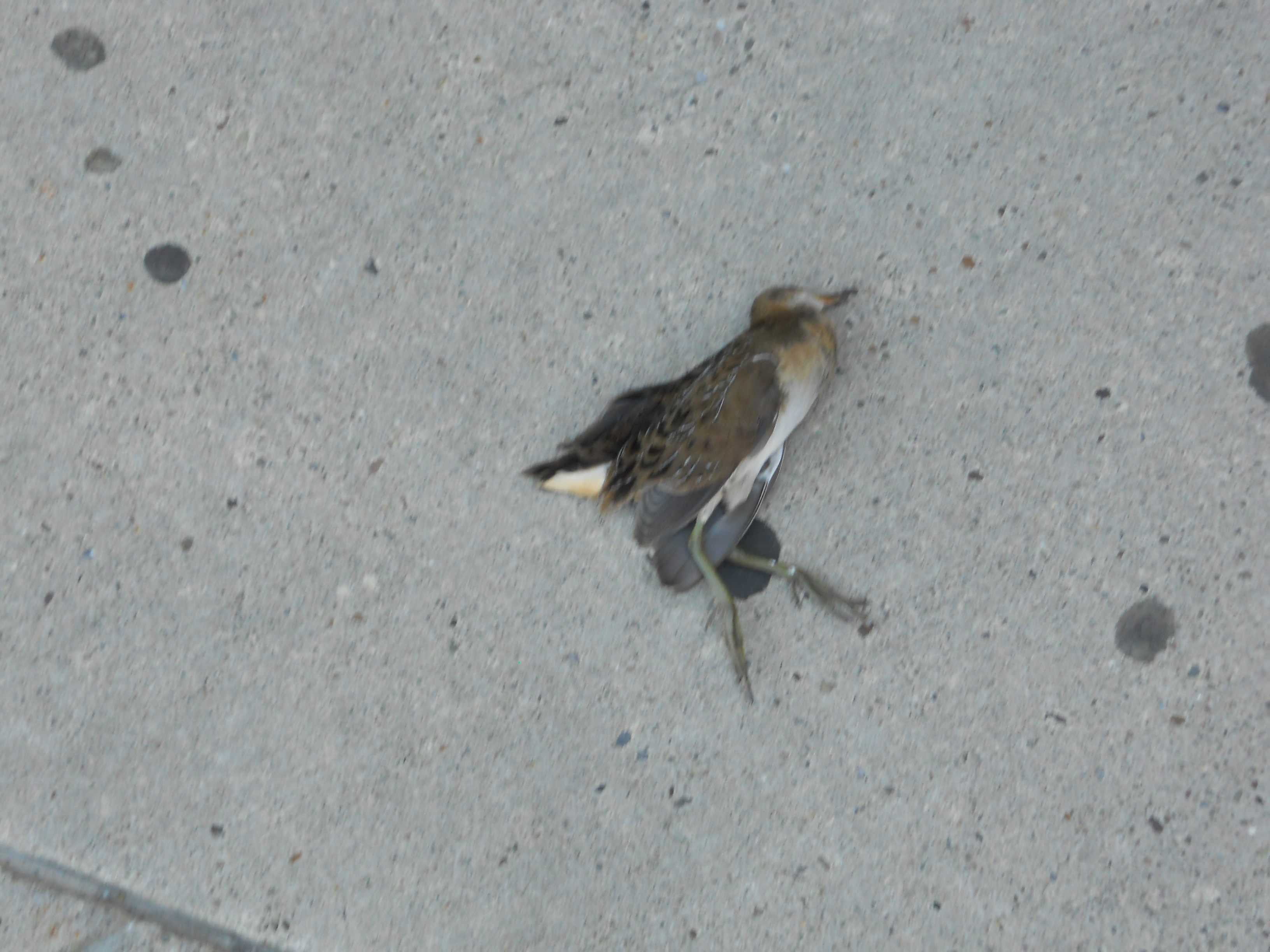 Birds dead things we find for Ikea pittsburgh pennsylvanie