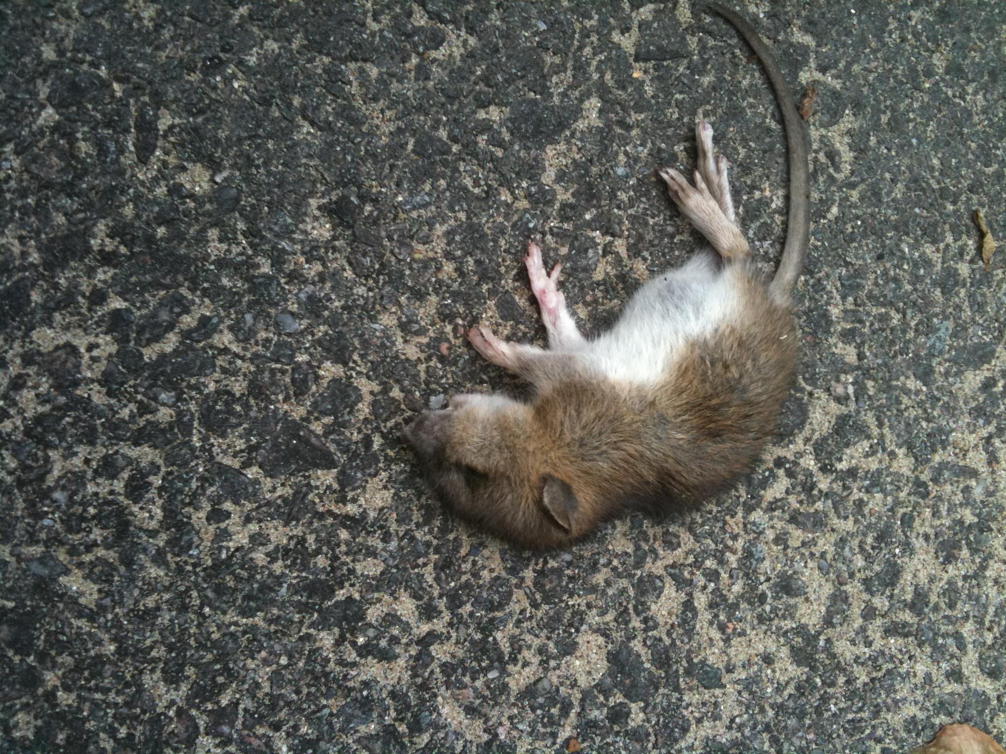 Dead Or Alive 4 Торрент